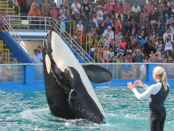 Powerful Voices Join the Call to Retire Lolita After 45 Years in Captivity