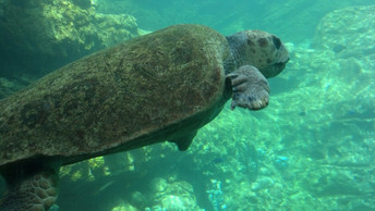 Conservation Groups File Lawsuit for Sea Turtle Protection