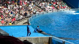 SeaWorld Issues List of Excuses at PMA Extension Hearing