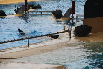 Orca Morgan Smashes Her Head...and Loro Parque Says This is Normal