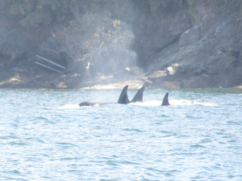 Washington Cetacean Bill Moves to the House