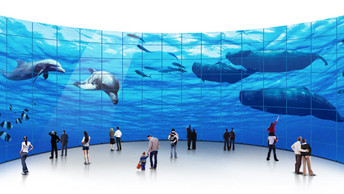 Ocean Walls – Captivating People, Keeping the Wild Free
