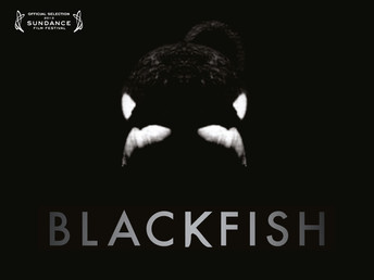 Blackfish gives SeaWorld an Opportunity to Step Up to the Plate