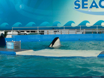 Miami Seaquarium To Be Sued Over Violating the ESA For Orca Cruelty