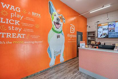 Dogtopia Dog Day Care Center.jpg