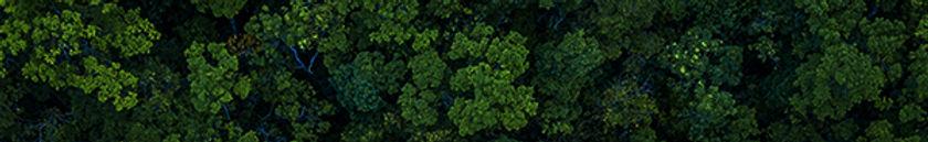 PTV Nature_tile.jpg
