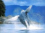 Ballenas jorobadas excursiones dominicana