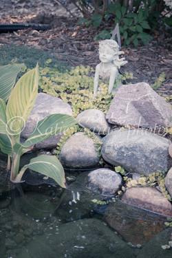Pond Wonder