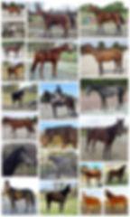 chevaux 201718.jpg