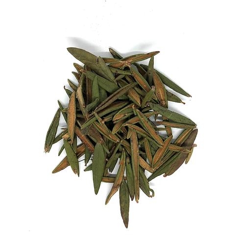 Labrador Tea