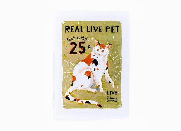 "A5 Postcard ""Three-Eyed Cat"""