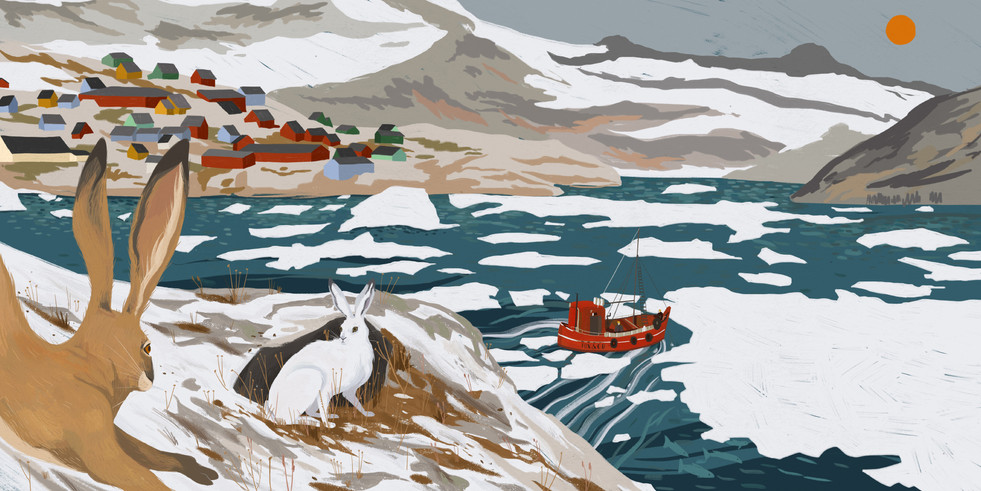 Leap, Hare, Leap - Arctic Hare