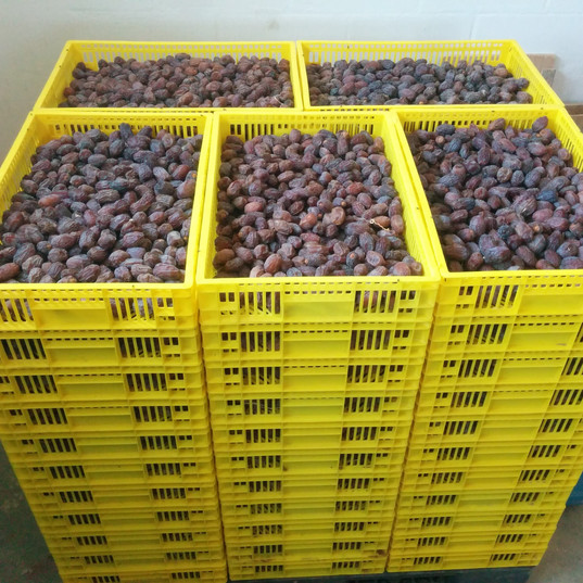 harvested dates