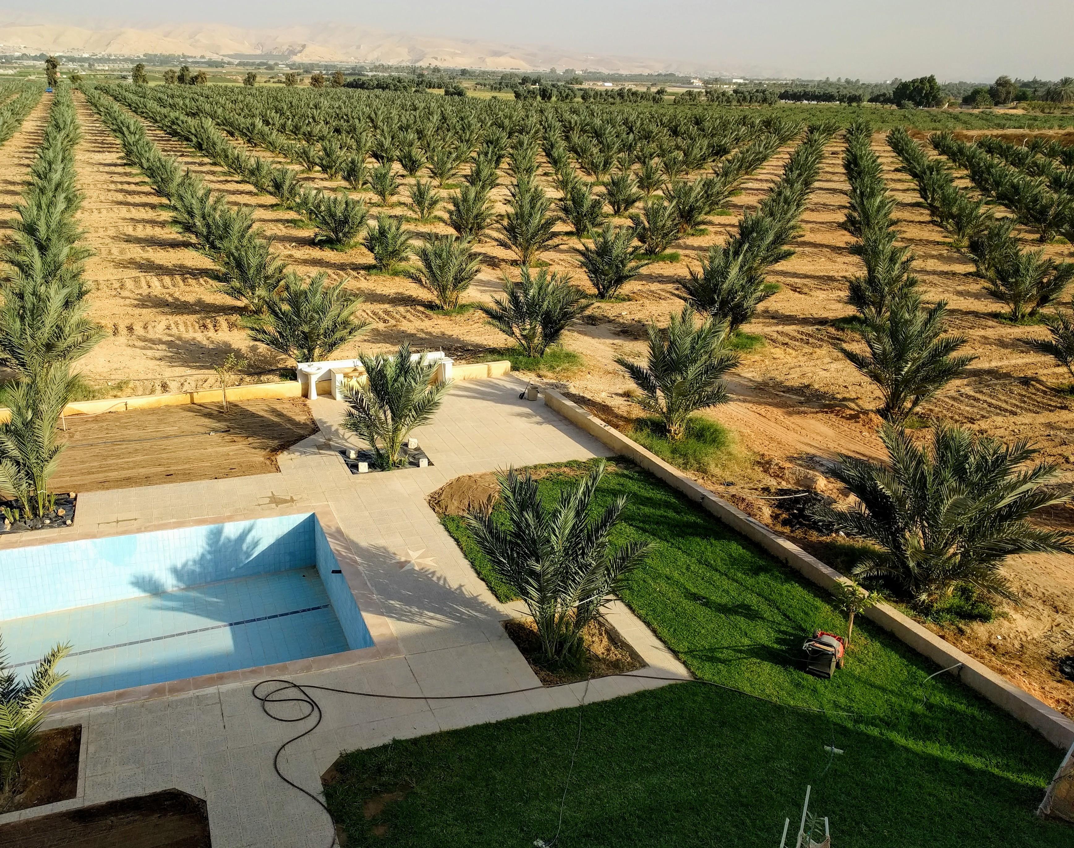 nawa dates farms jordan