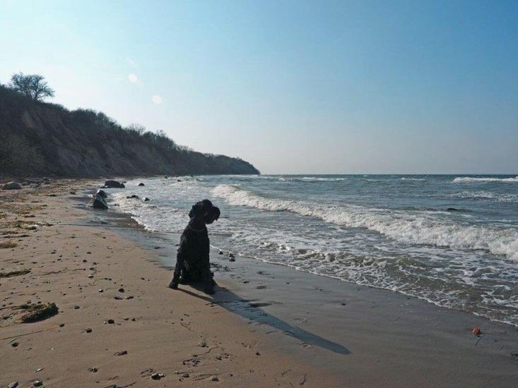 5615 Urlaub mit Hund Steinbeck