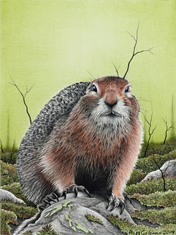 Ground Squirrel 3 72dpi 25%.png