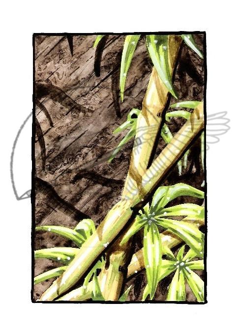 bamboo card '07.jpg