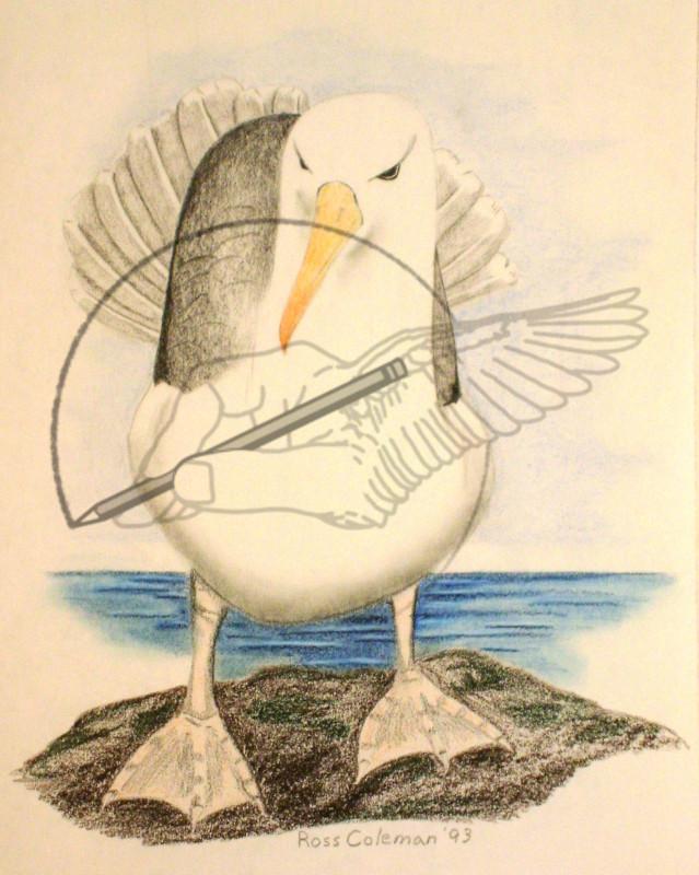 seagull '93.jpg