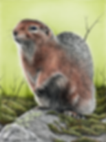 Ground Squirrel 2 72dpi 25%.png