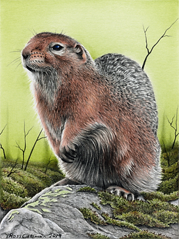 Ground Squirrel 2 72dpi 25%.png