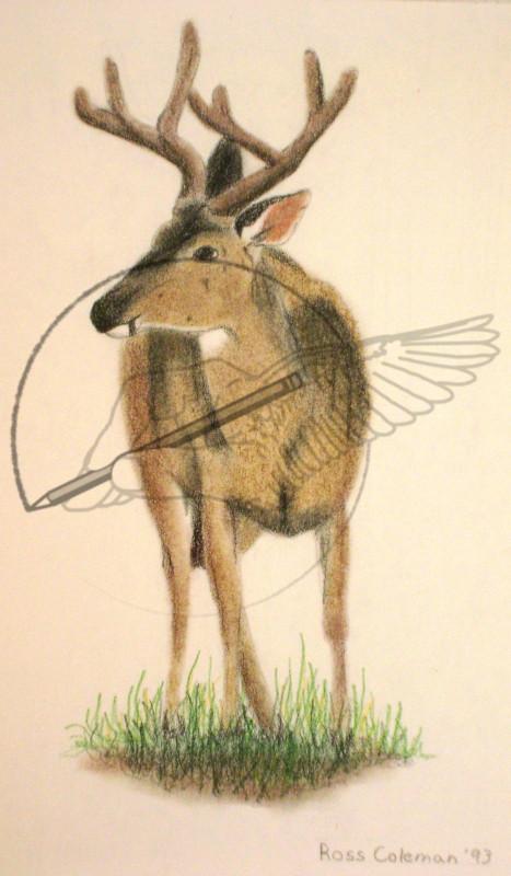 color deer '93.jpg