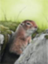 Ground Squirrel 1 72dpi 25%.png