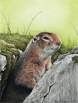 Ground Squirrel 1 72dpi 25%.png