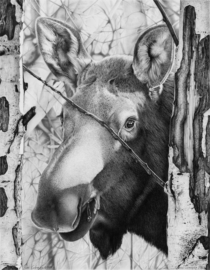 Moose Face 25% 72dpi.png