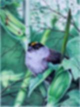 Chickadee 25% 72dpi.png