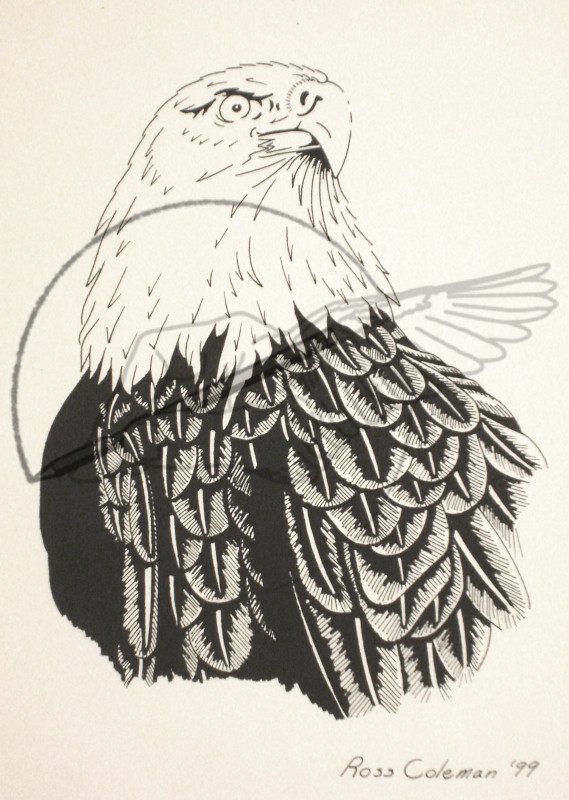 eagle '99.jpg