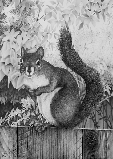 Squirel On Fence 25% 72dpi.png