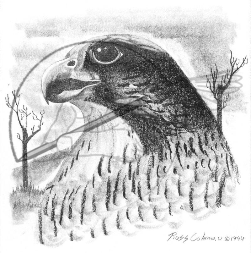 falcon '94.jpg