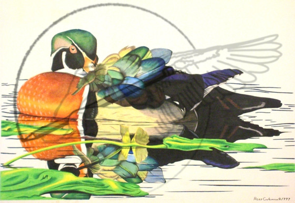 duck '97.jpg