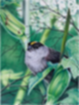 Chickadee 72dpi 25%.png