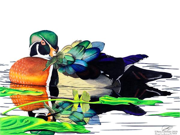 Duck 25% 72 dpi.png