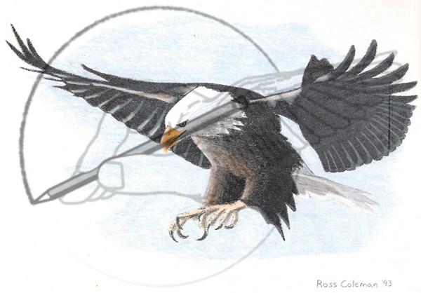 color eagle '93.jpg