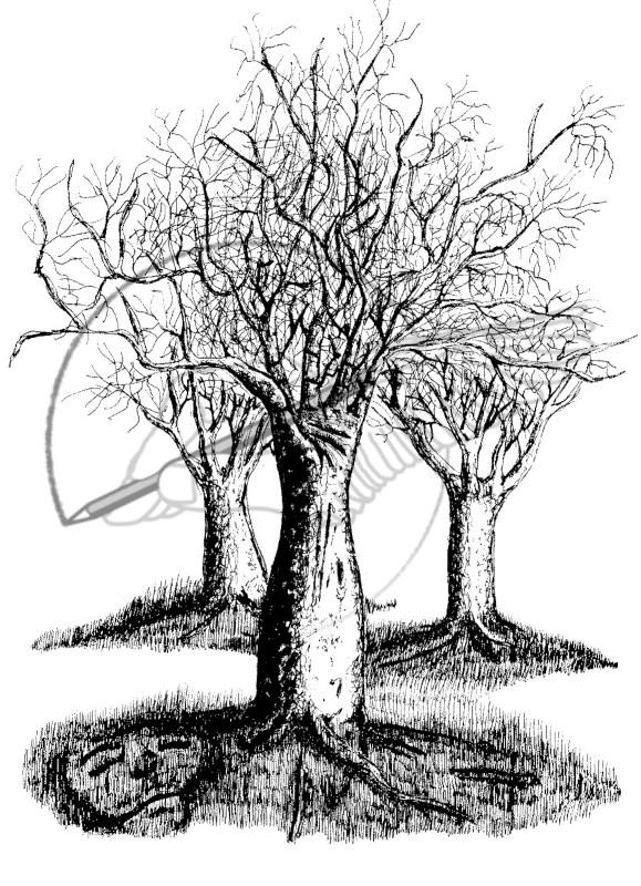 hand tree 'hs.jpg