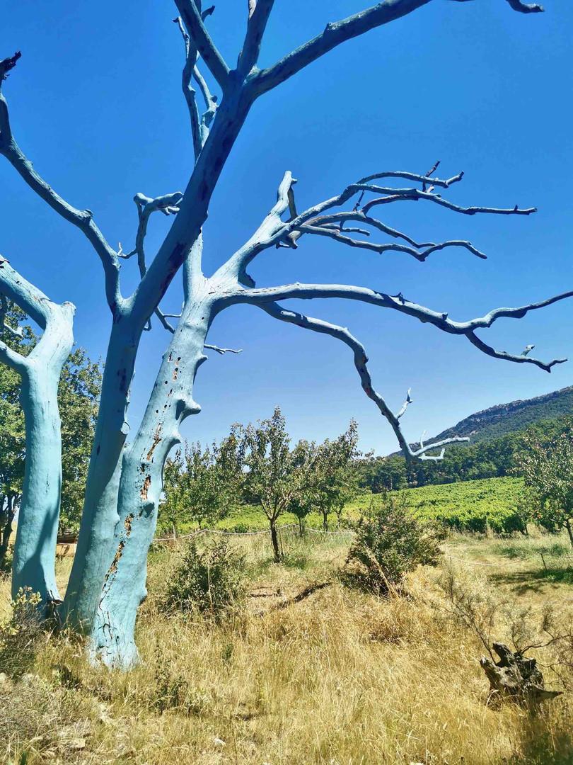 Oui, le Chêne Bleu existe !