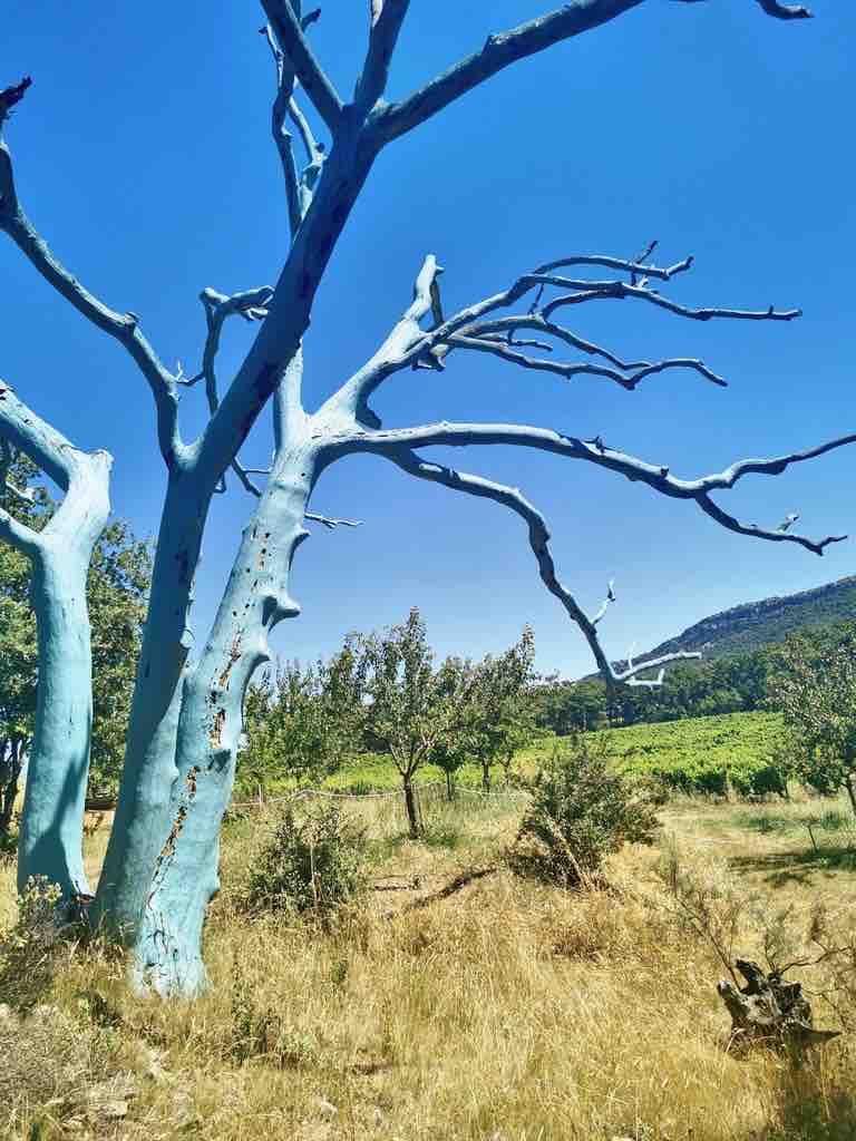 Domaine du Chêne Bleu - Aop Ventoux - arbre