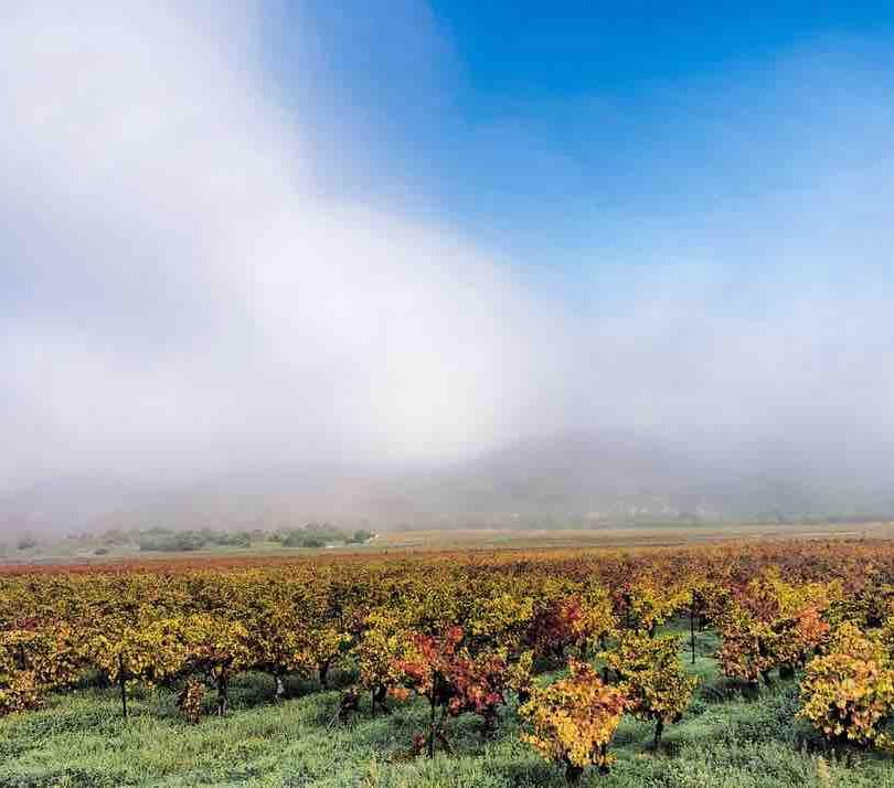 Brouillard dans le Gard