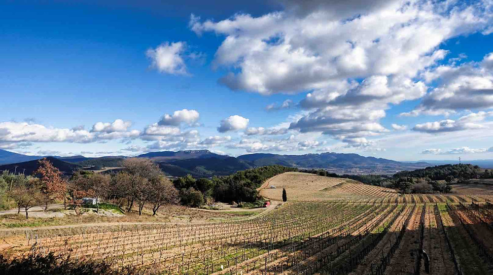 Vue des hauteurs de Rasteau, depuis le domaine des Escaravailles. Au premier plan, les vignes du domaine et dans le fond les dentelles de Montmirail.