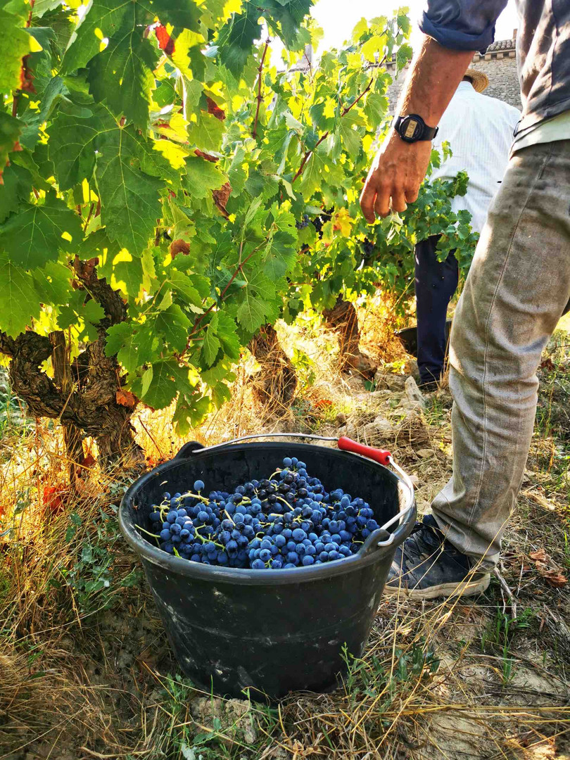 Souvenir de vendanges