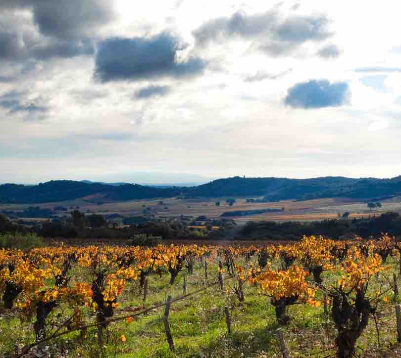 Ballade dans les vignes - Tavel
