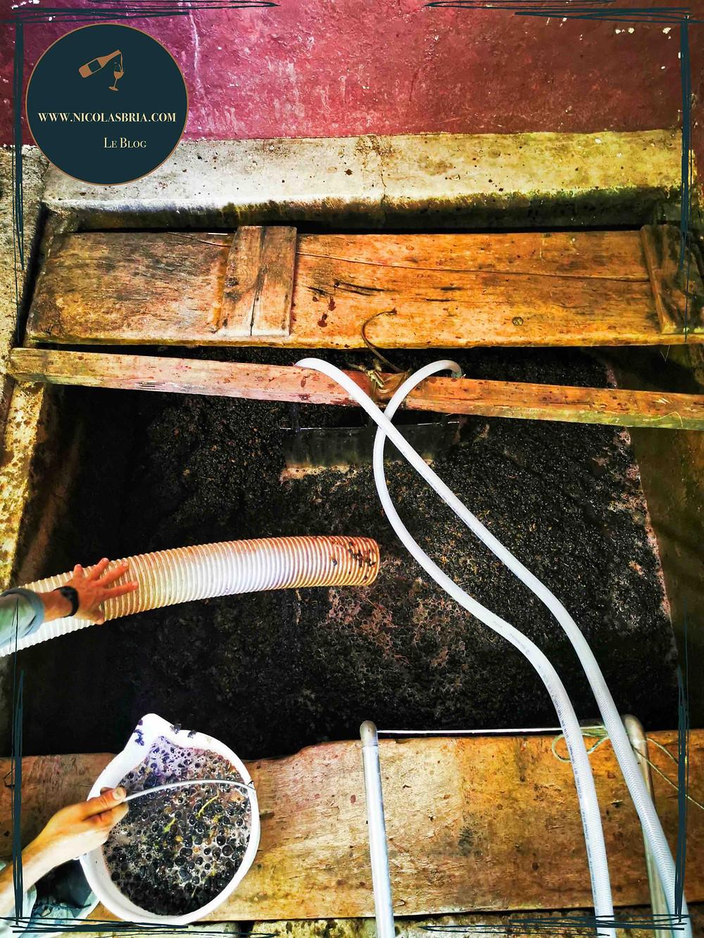 On y voit une cuve en pierre rempli de raisins en train de fermenter
