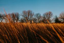 promontory-point-prairie-sunrise-engagement-wedding-chicago-fine-art-photographer-rotarski