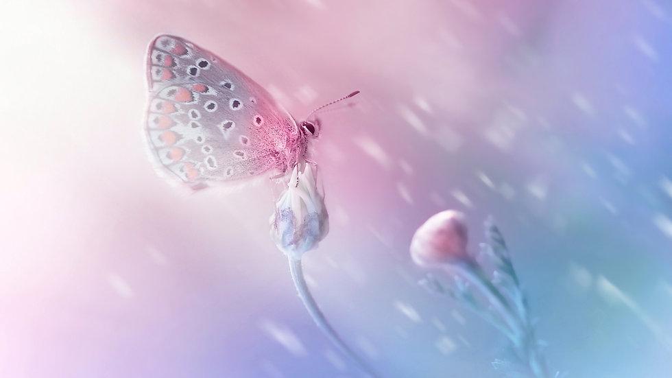Butterfly design (1).jpg