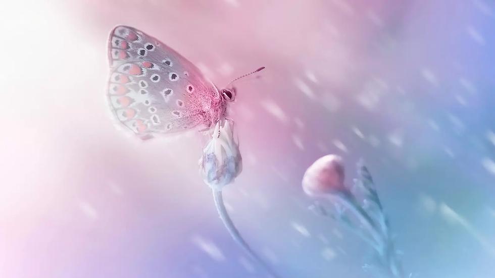 Vulpés Nierengurt - beheizbarer Nierenwärmer / Ergonomisches Design inspiriert von der Natur