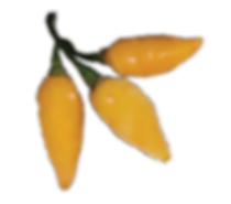 datil-peppers-new.png