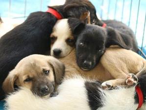 Feira de adoção de animais acontece hoje no Campolim