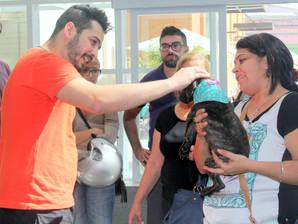 Feira de adoção de animais acontece neste sábado